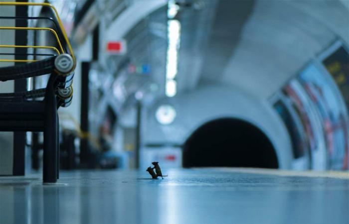 'معركة بين فأرَيْن'.. صورة نادرة حازت على جائزة ثمينة!