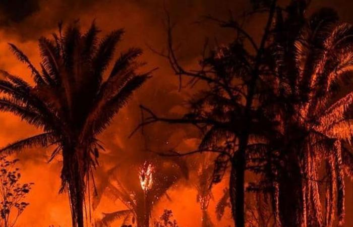 شبح كارثة الأمازون يلوح في الأفق.. الحرائق تزحف مجددا